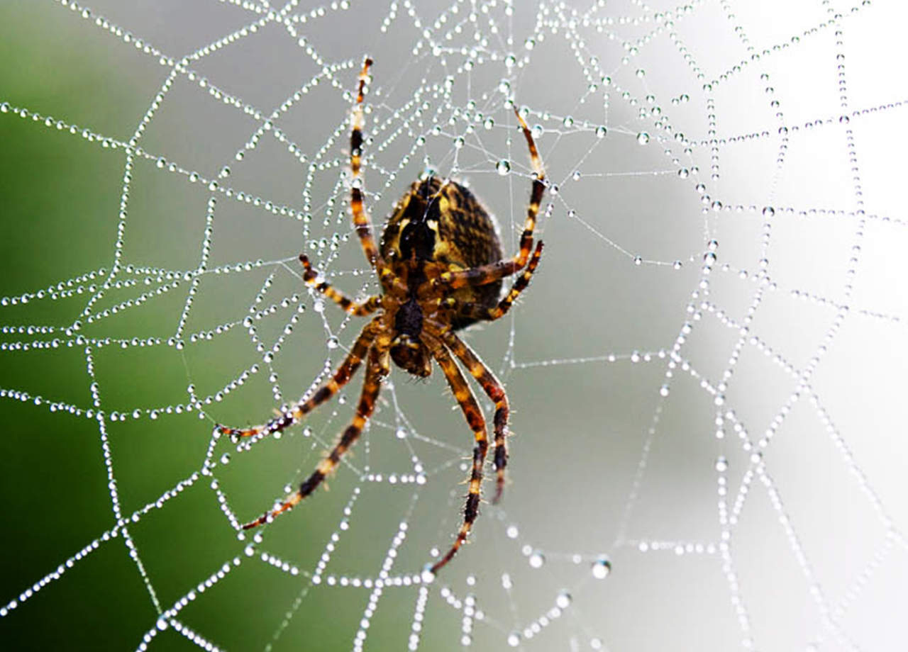 Spinnen bestrijding